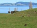 2016.09.11-15.05_-_Nouvelle_Zélande_-_IMG_0306