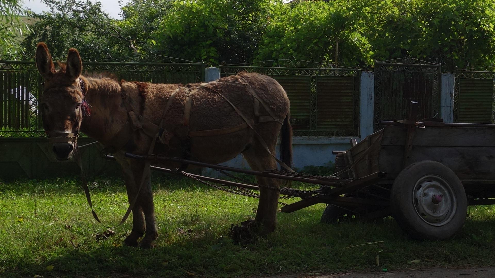 2014.06.25-07.51_-_Roumanie_-_DSC01367