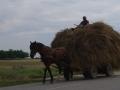 2014.06.24-10.24_-_Roumanie_-_DSC01338