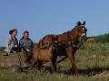 2014.07.03-06.56_-_Roumanie_-_DSC01602