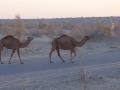 2014.10.14-07.09 - Turkménistan - DSC04433