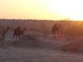 2014.10.14-07.09 - Turkménistan - DSC04434
