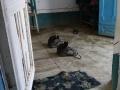 2014.10.21-11.10 - Ouzbékistan - DSC04627